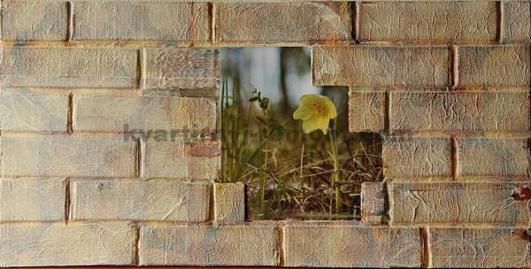 Фото: Высохшая стена