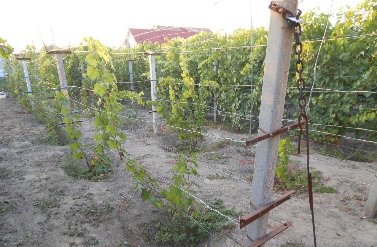 Шпалеры для винограда с козырьком своими руками фото