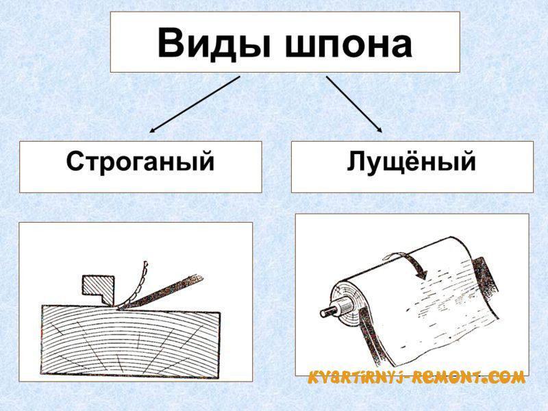 vidy-shpona