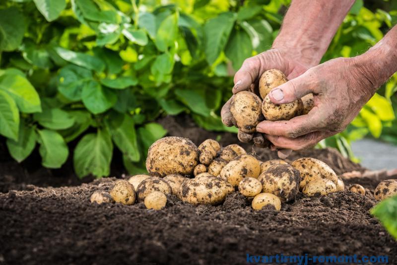 Урожай на своей земле