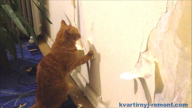 Кот помогает обдирать обои