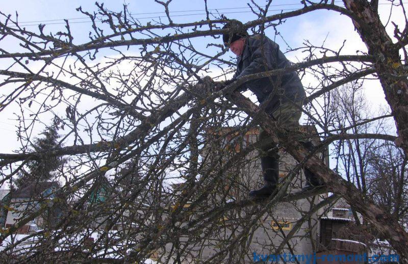 Нужна ли обрезка деревьев зимой?