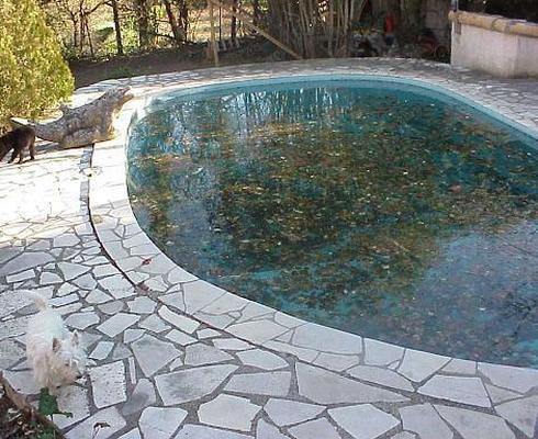 Как ухаживать за бассейном, что бы он не зацвел
