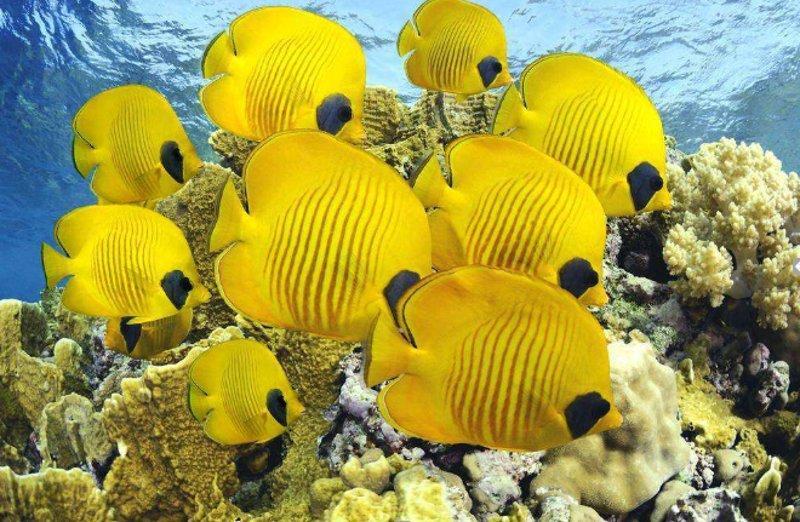 Подводный мир с красивыми рыбками