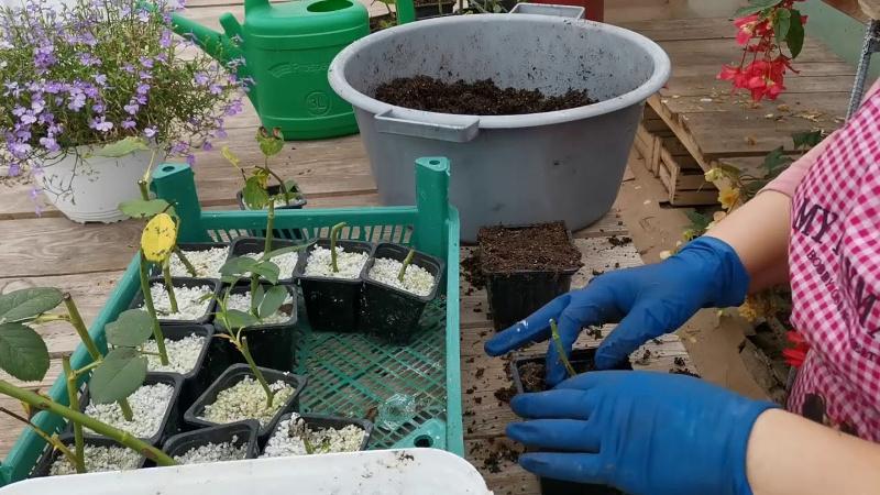 Советы опытных растениеводов