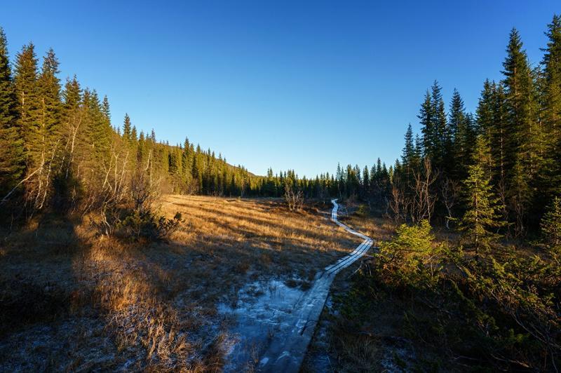 Лес Норвегии